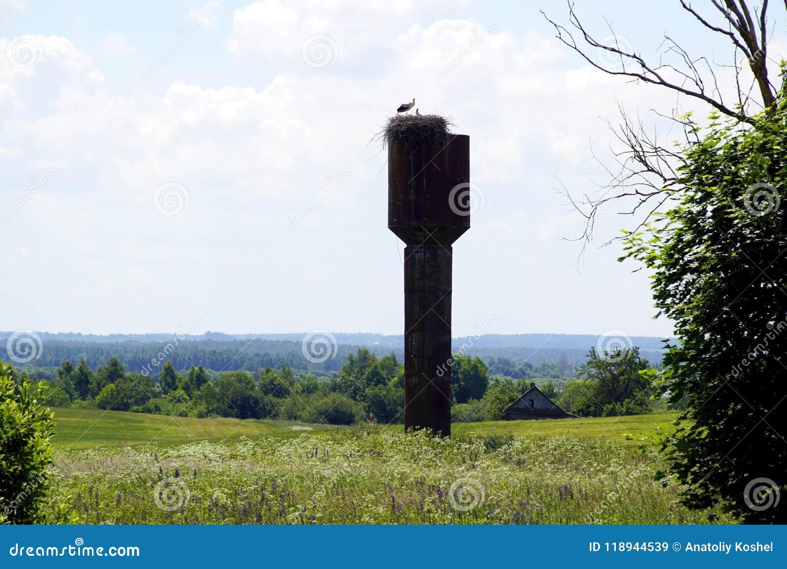Middag i Juni Bygga bo med storkar på det gamla vattentornet vidder