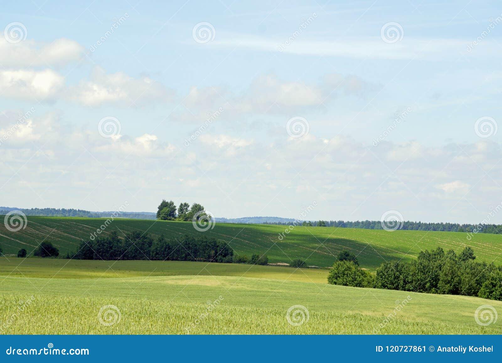 Middag i Juni vidder avstånd Härlig sikt av fälten och småskogen på en solig dag