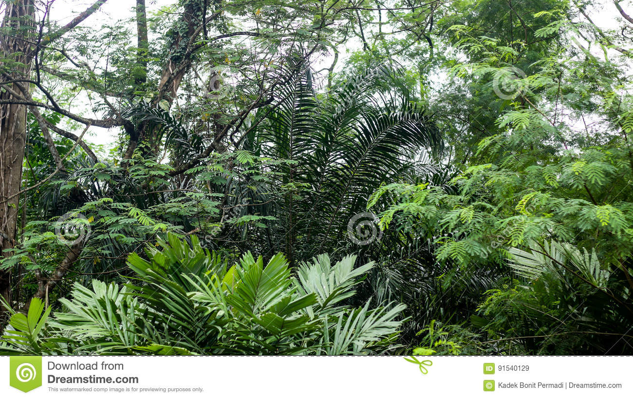 In The Middle of Deep Tropical Rainforest