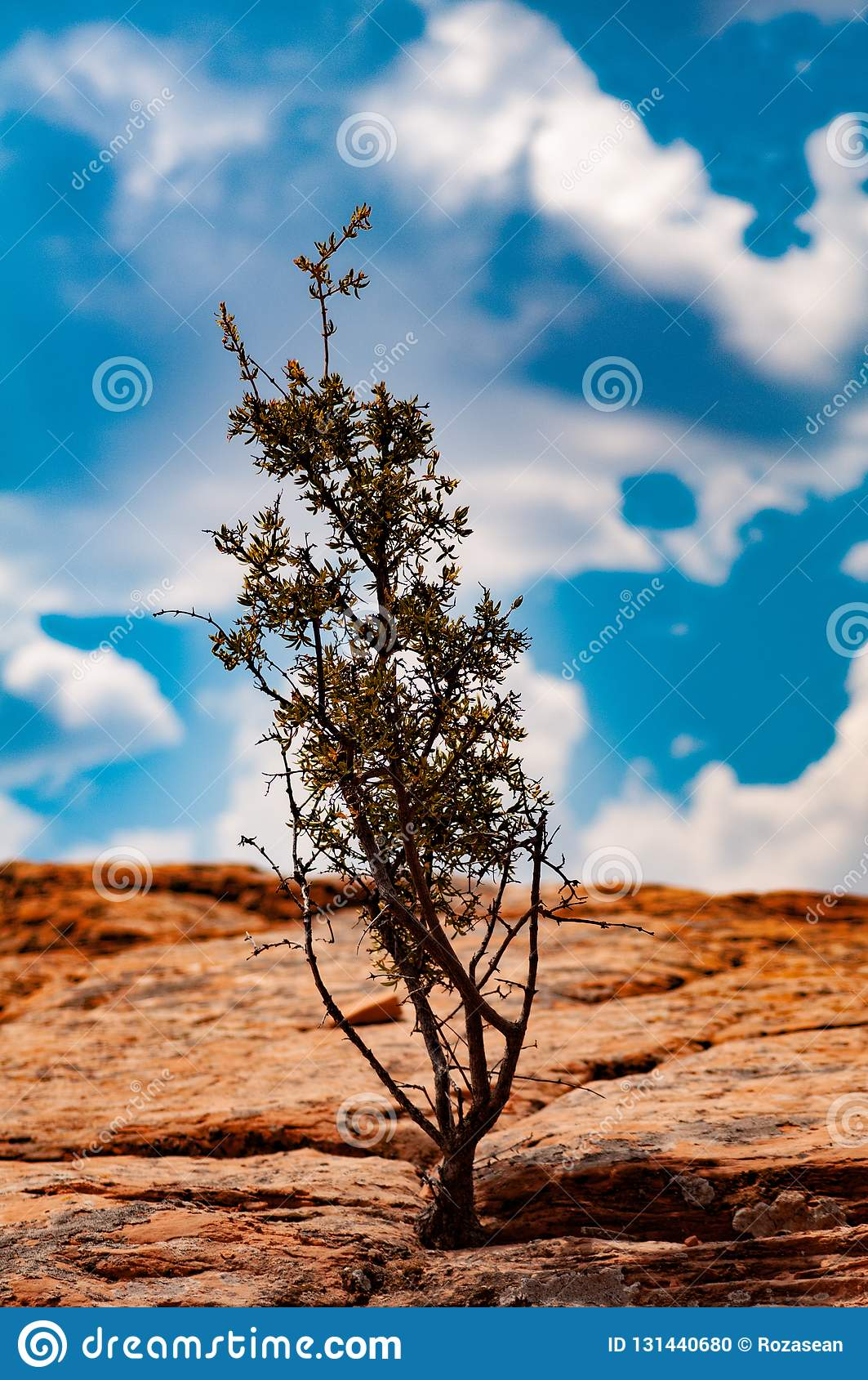 Vegetation, Trees In The Colorado Plateau In Tuba City