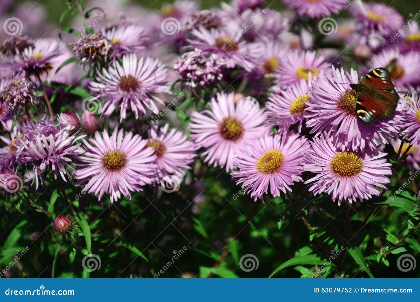 Download Midi photo stock. Image du saison, durée, nature, sunlight - 63079752