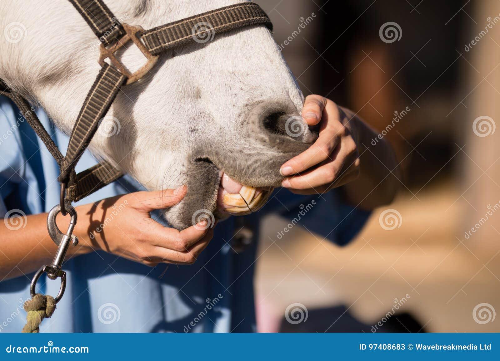 esame del cavallo