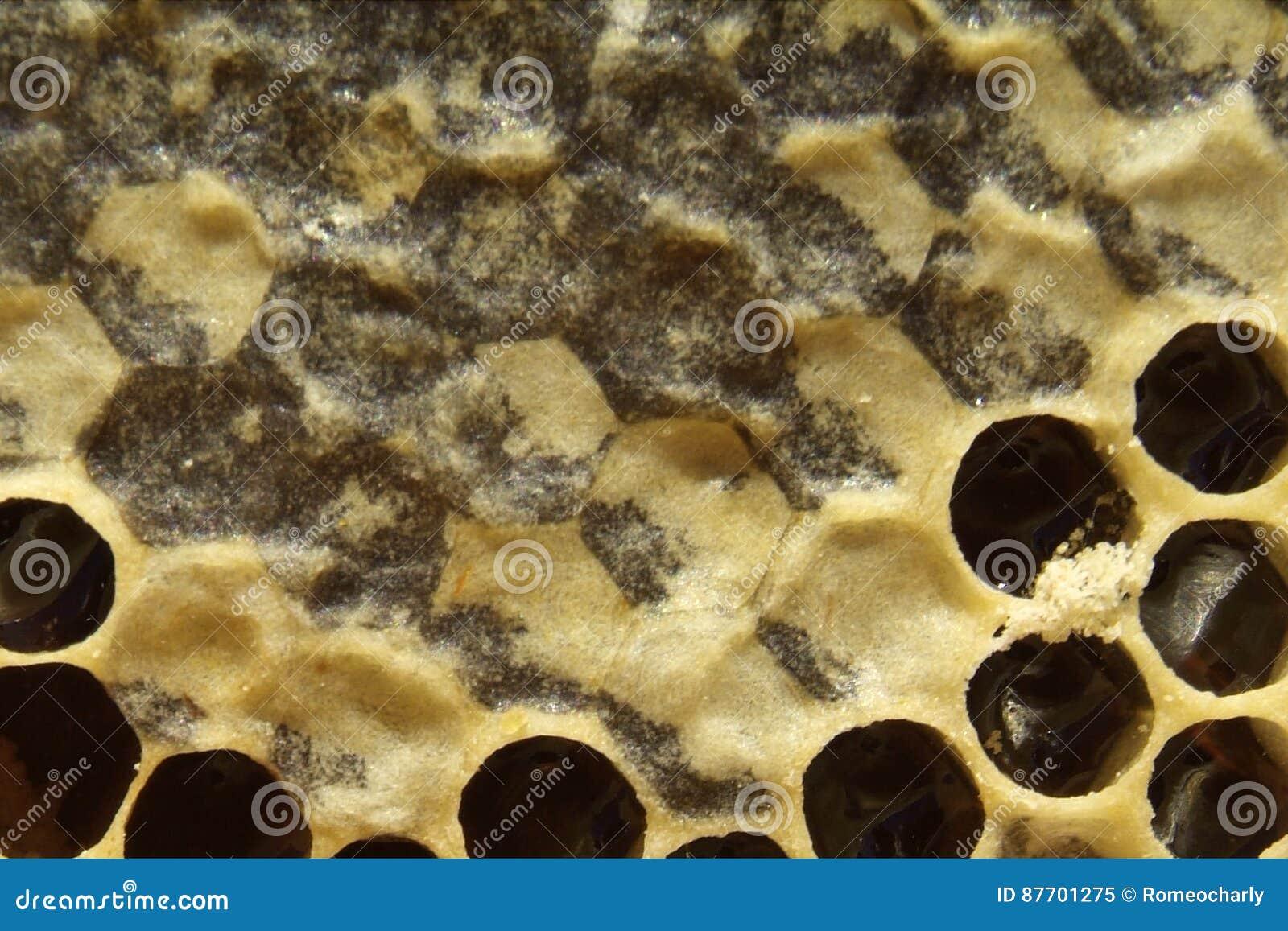 Miel frais dans la texture de peigne