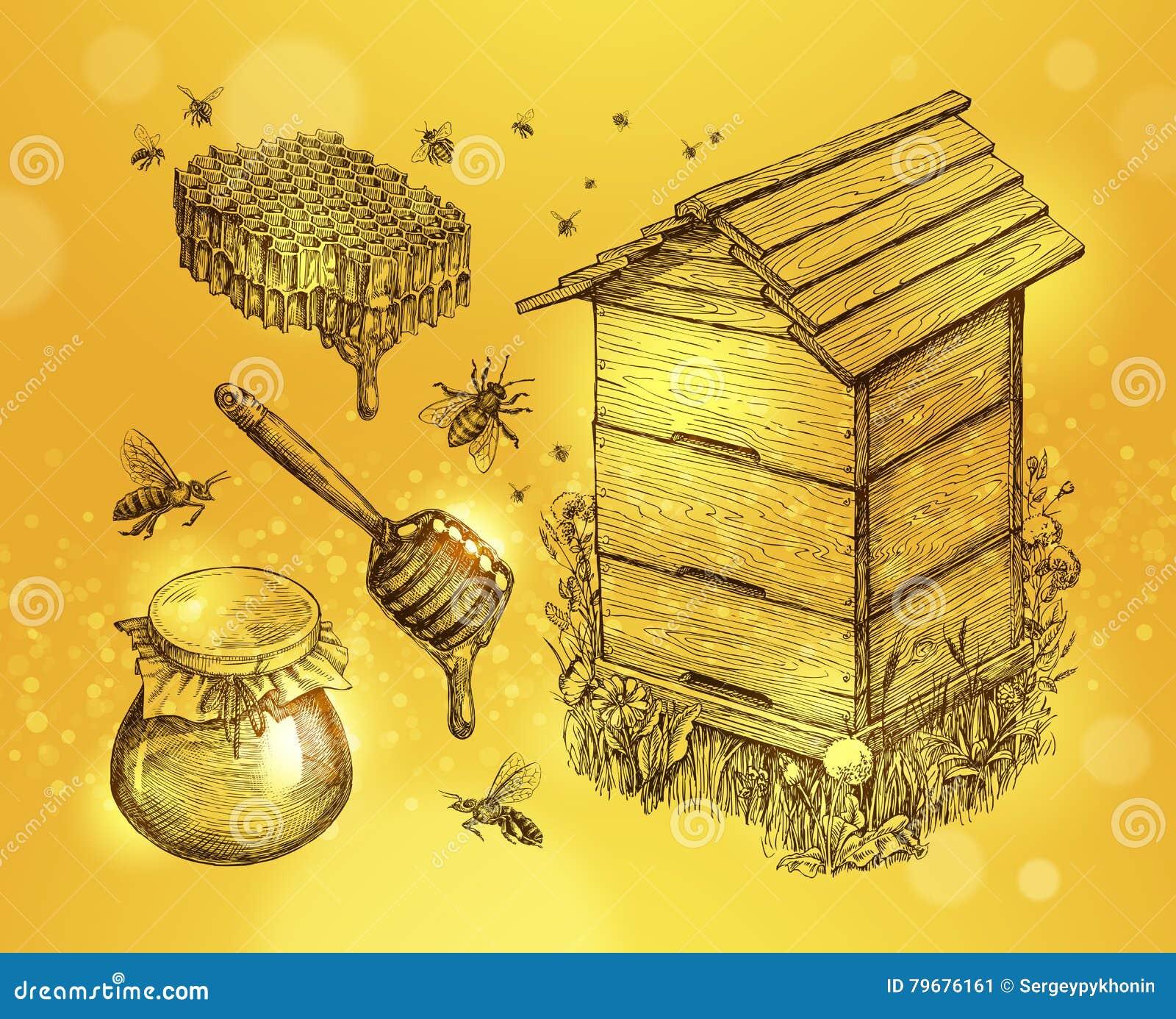 Miel, hydromel, l apiculture Illustration tirée par la main de vecteur de croquis d apiculture