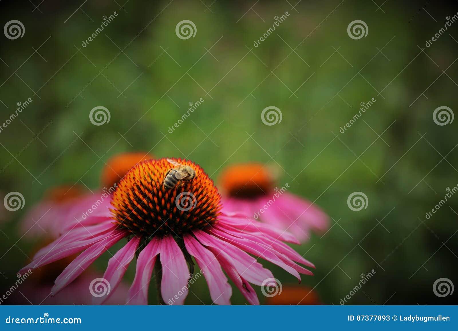 Miel rose de fleur et d abeille