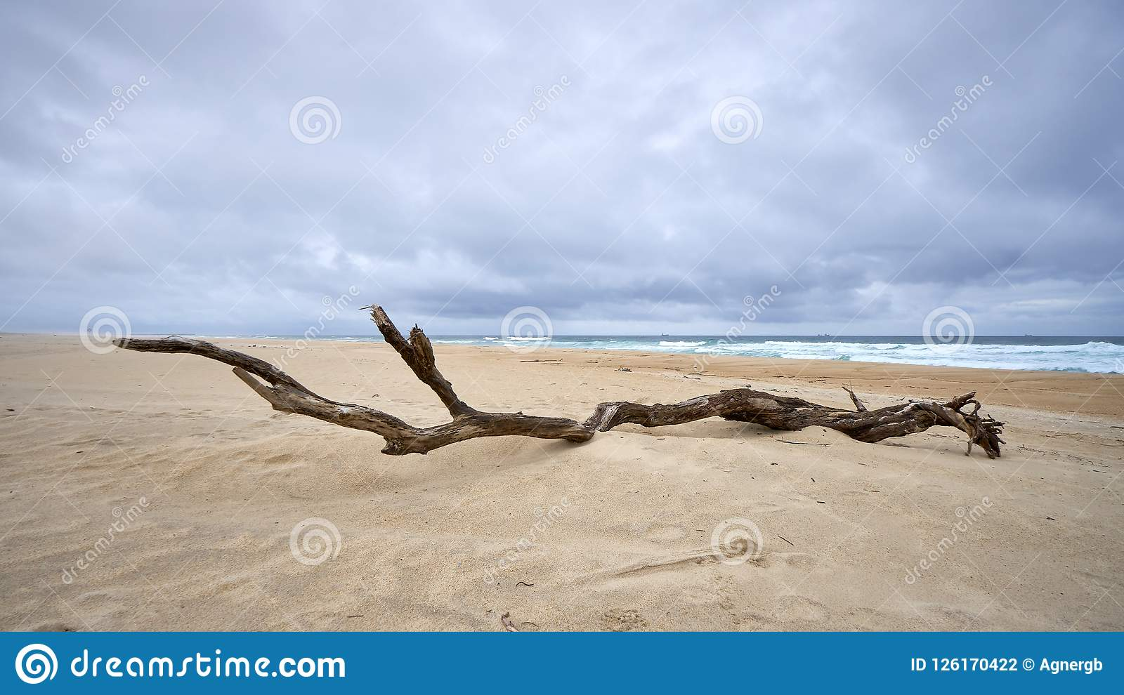 Miembro viejo en las dunas blancas del sao Jacinto