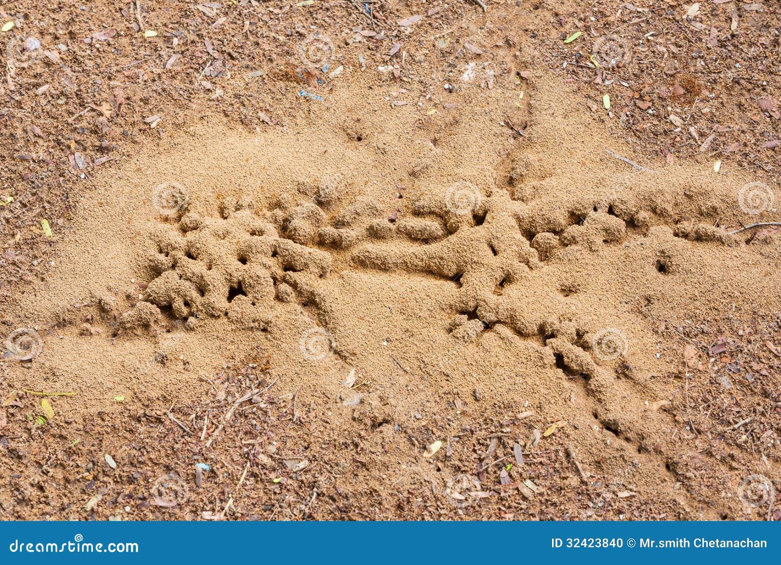 mierennest stock foto afbeelding bestaande uit zand. Black Bedroom Furniture Sets. Home Design Ideas