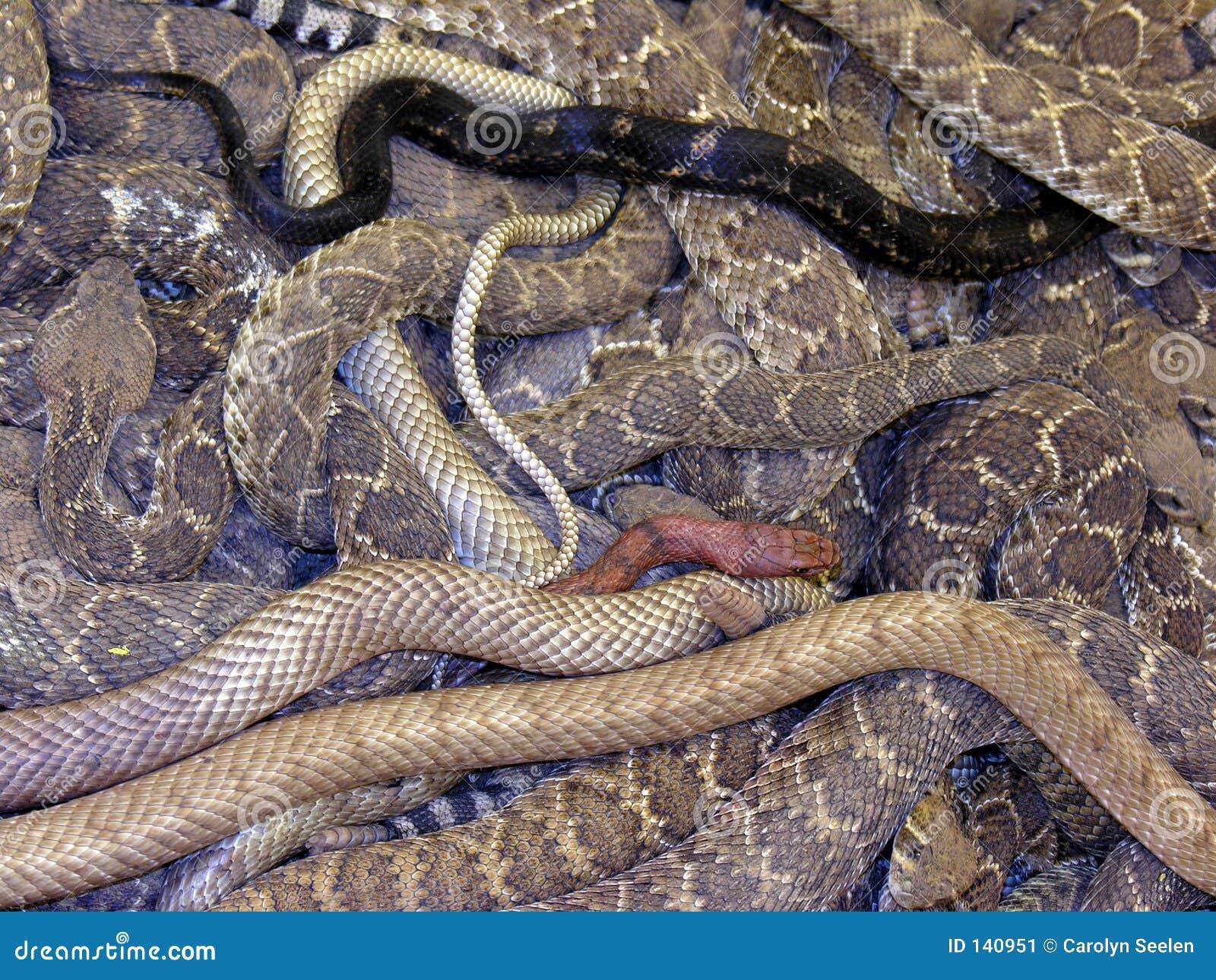 Mieszankę wąż