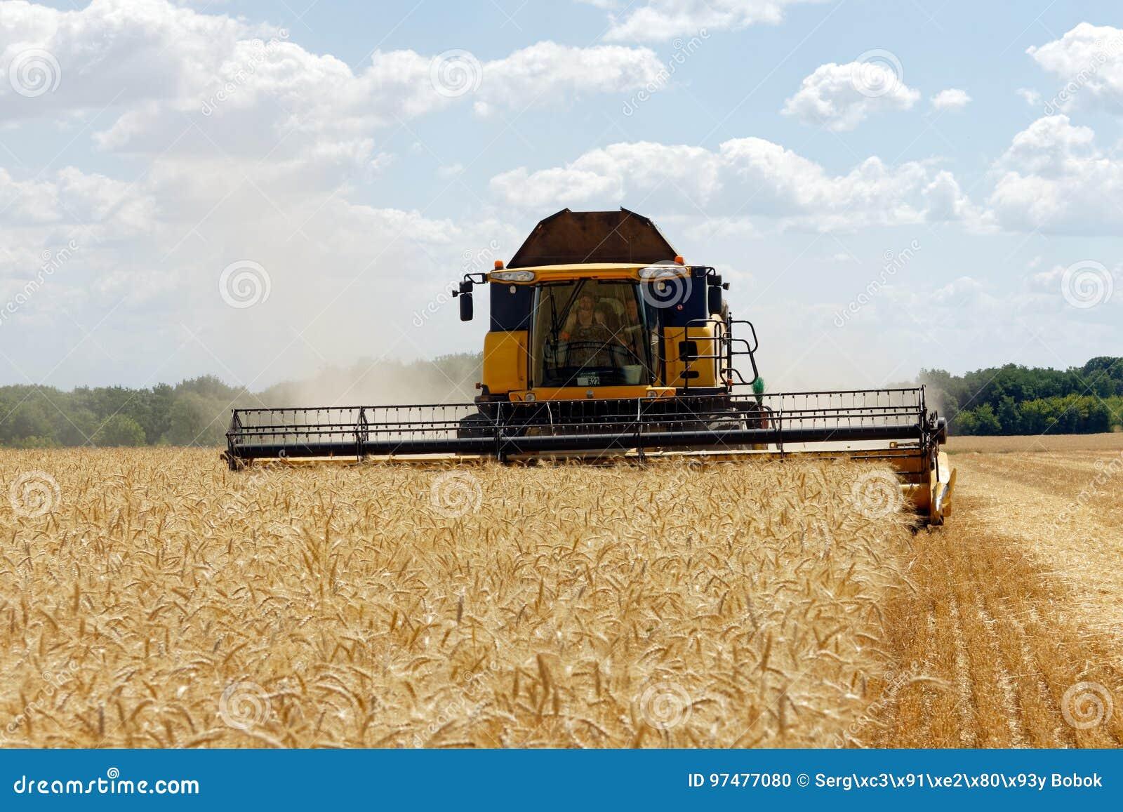 Mietitrebbiatrice che lavora ad un campo di frumento