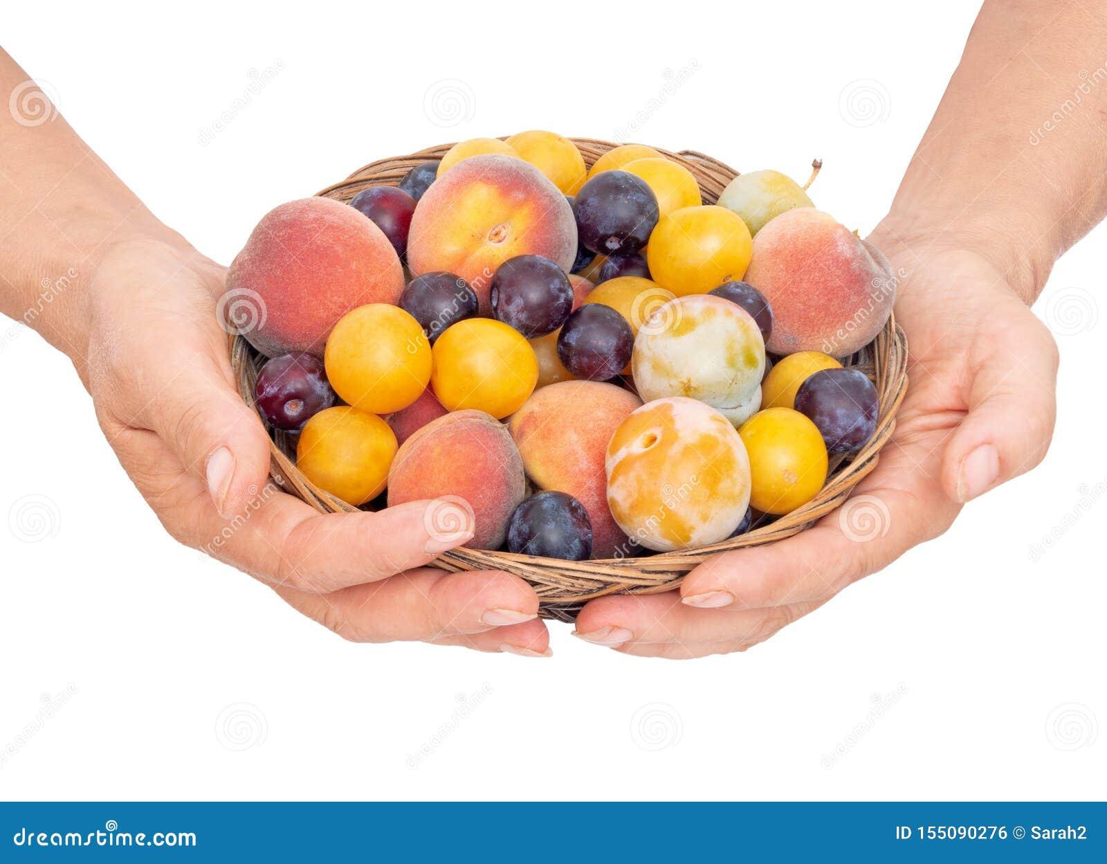 Mig med gammalmodig frukt från en lång övergiven fruktträdgård Mycket små gula plommoner, krikon, renklor och litet som är söta