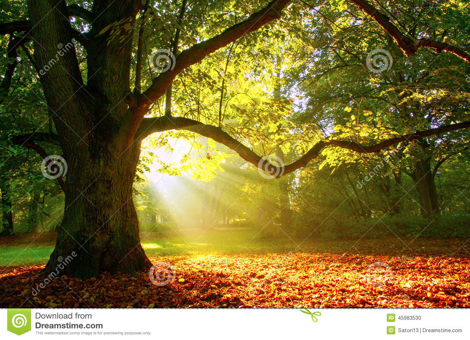 Mighty Oak Tree Stock Photo Image 45983530