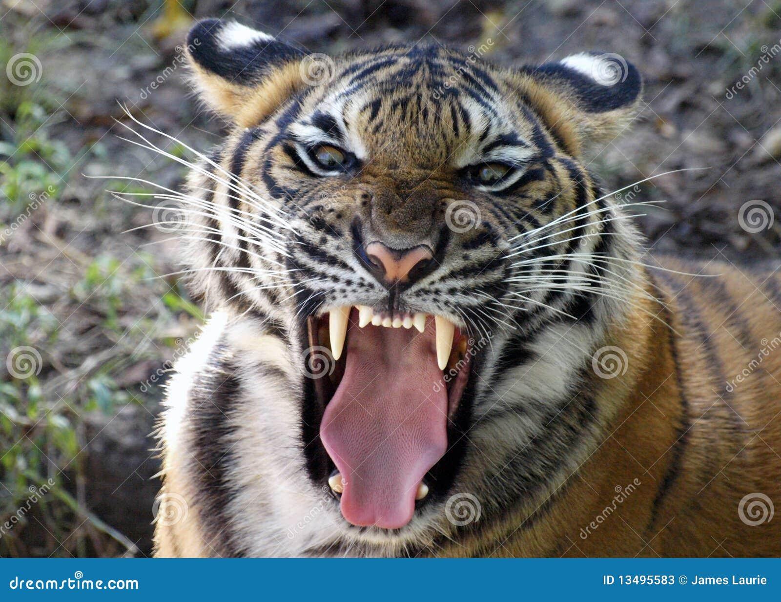 Mighty Roar