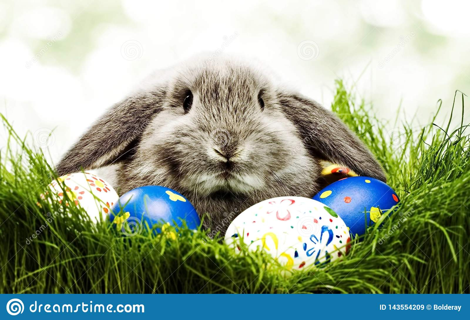 Mignon peu de lapin avec des oeufs de pâques dans les herbes Symbole de Pâques Lapin-Pâques dans la culture d une certaine Europe