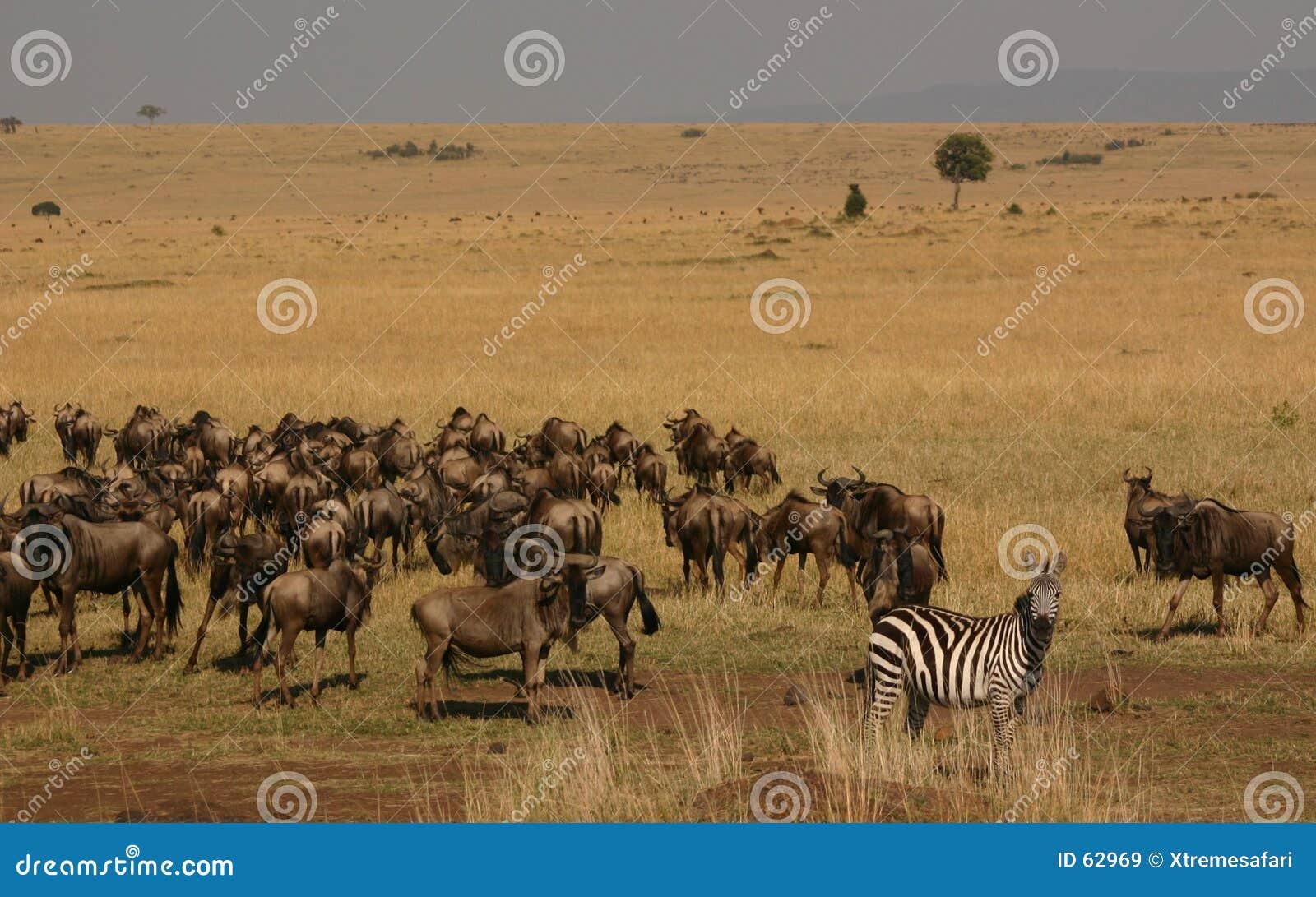 Migração de Mara