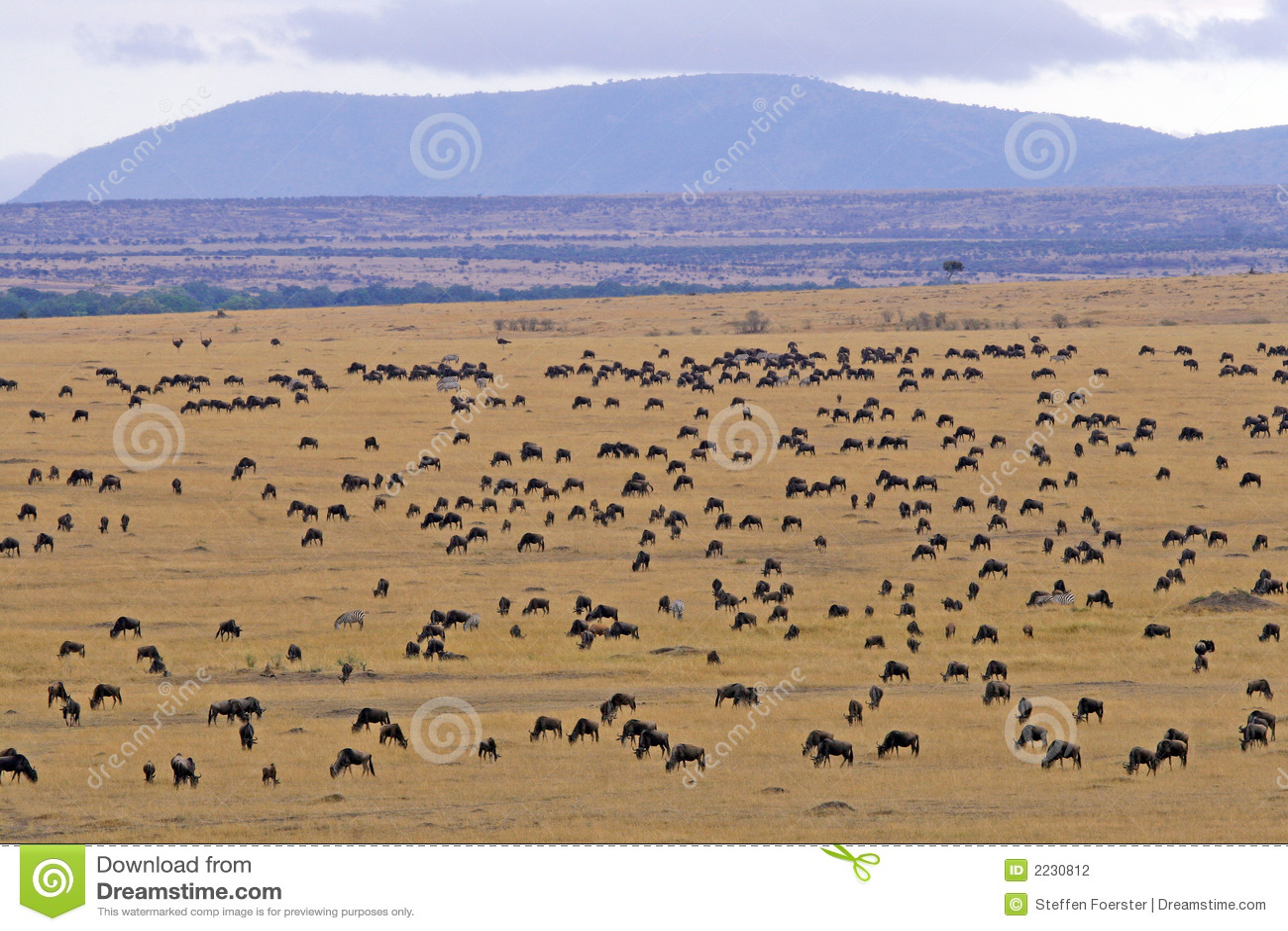 Migración del Wildebeest