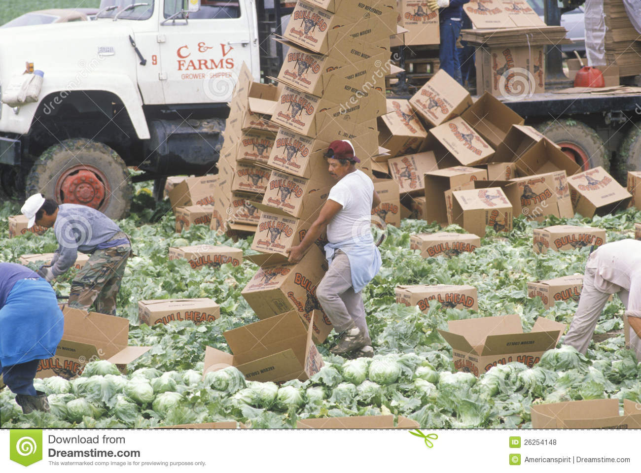 Migrant Farm Workers Harvest Editorial Stock Photo Image
