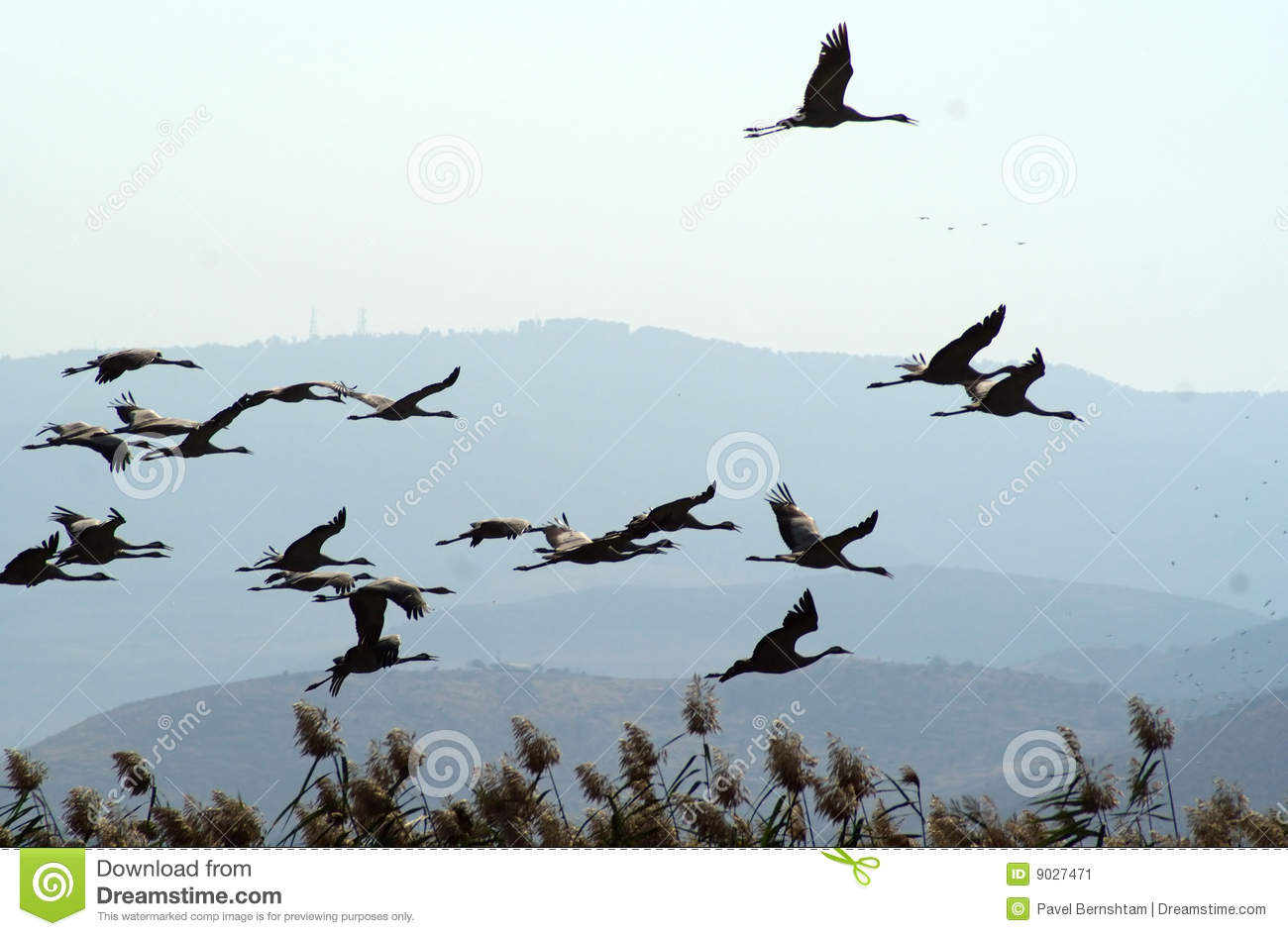 Migrating birds over lake at spring and autumn