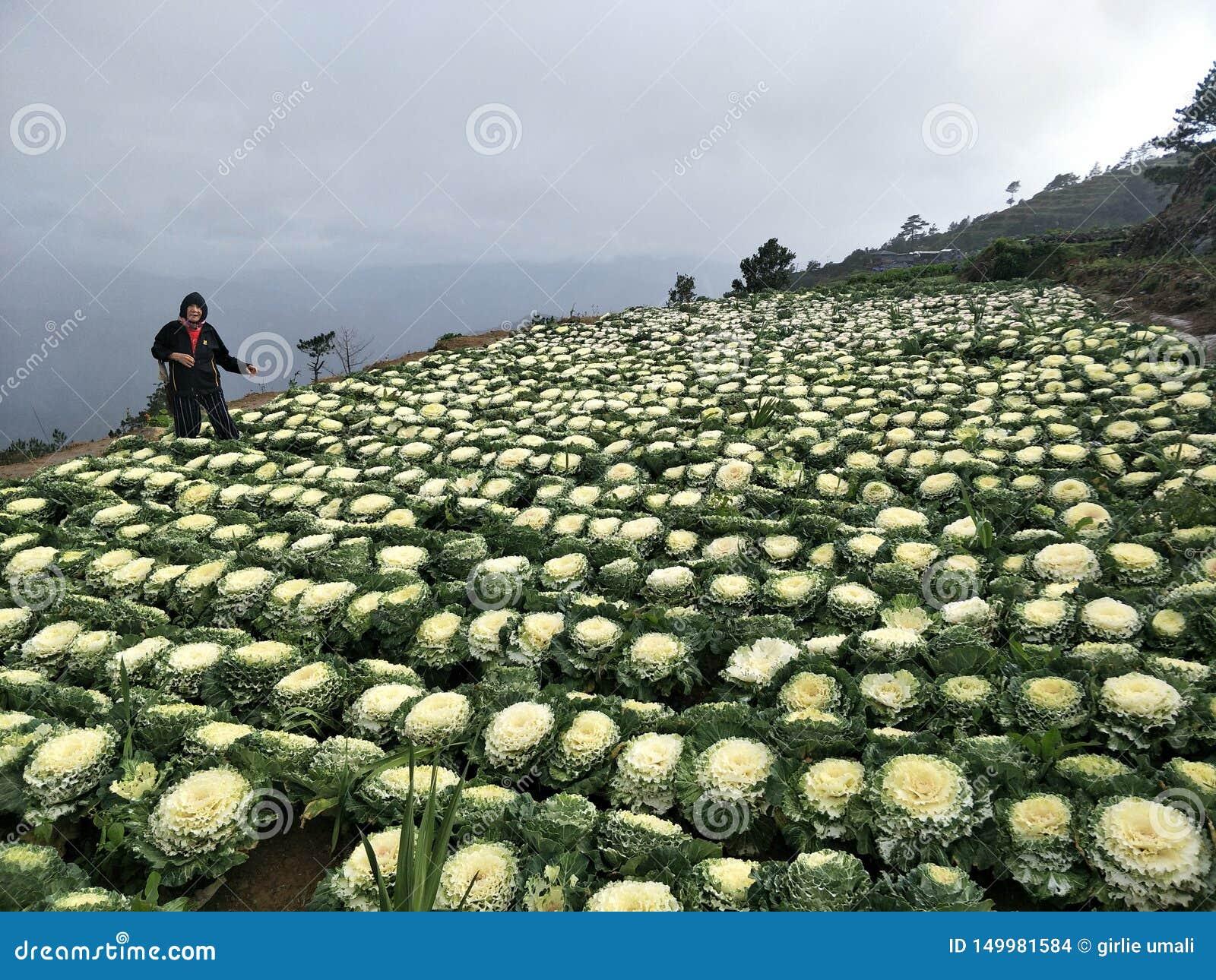 Mijn Moeder bij Bloemkoolbloemen van Benguet