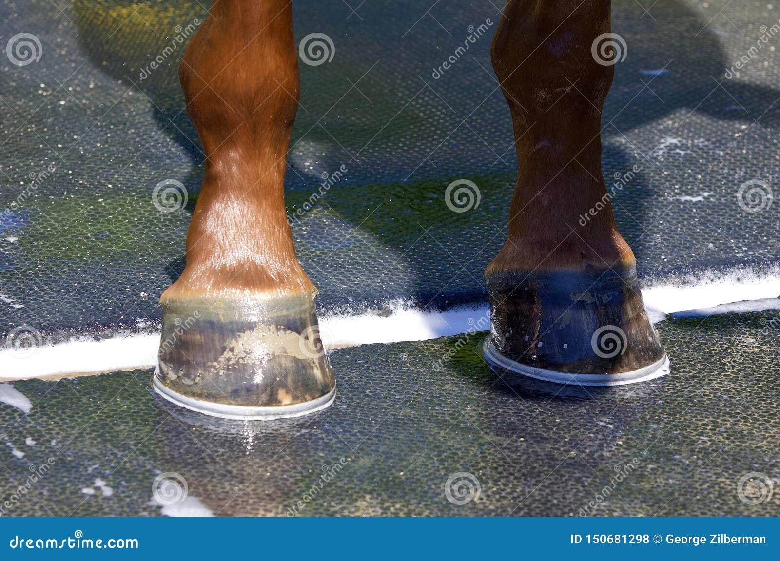 Mijn Nieuwe Ierse Danzing-Schoenen
