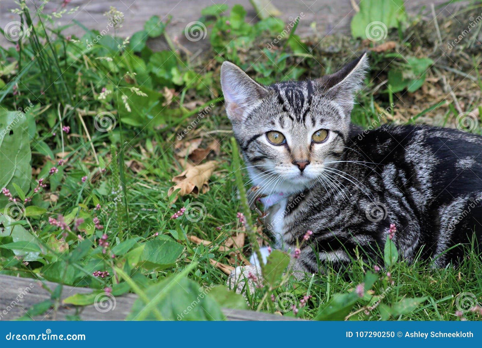 Mijn in openlucht Kitten Exploring