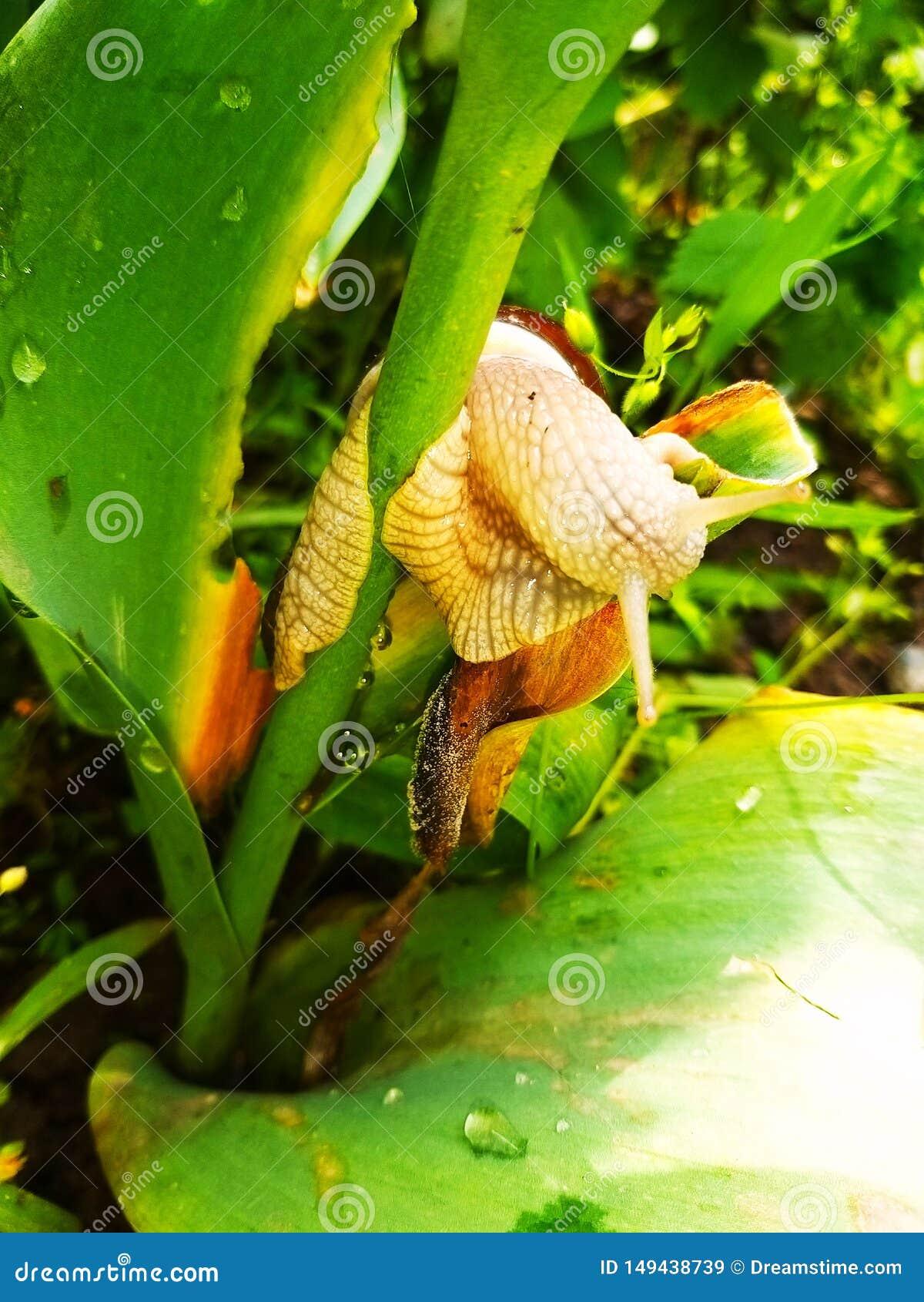 Mijn slak eet mijn bloem