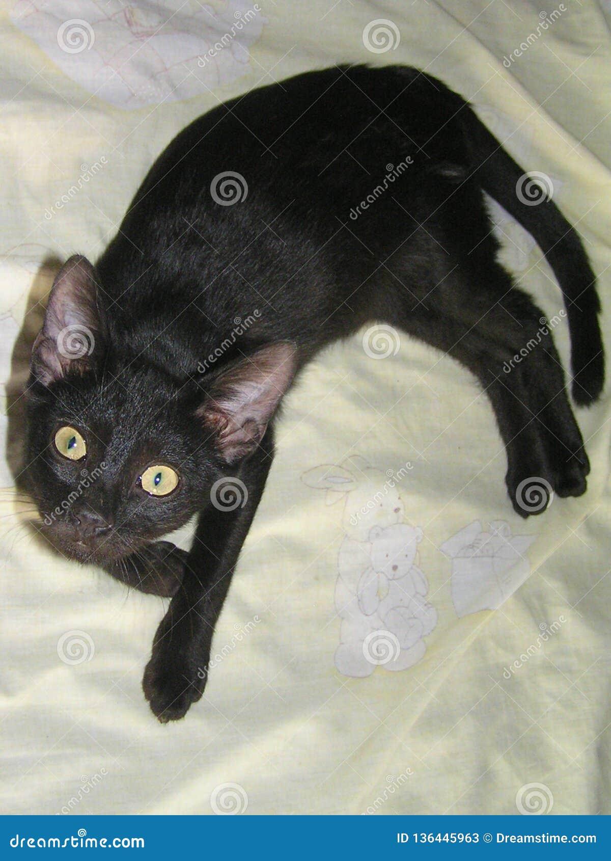 Mijn zwarte kat