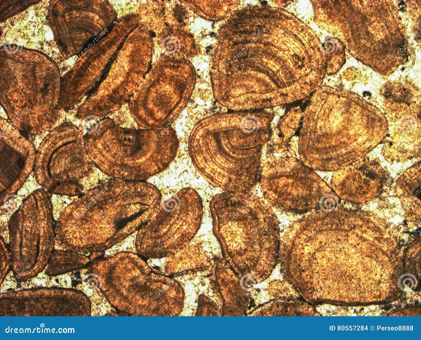 Mikro-foto av det geologiska tunna avsnittet under kors-polariserat ljus