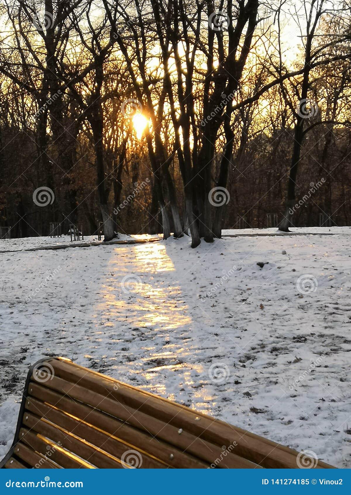 Milagre da floresta do inverno no meio da cidade