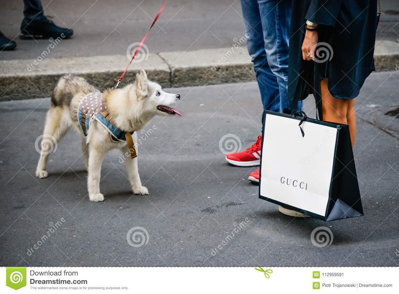 04c3595bece Milan, Italy - September 24, 2017: Tourist with a Gucci shopping bag during  Fashion week.. New Collection
