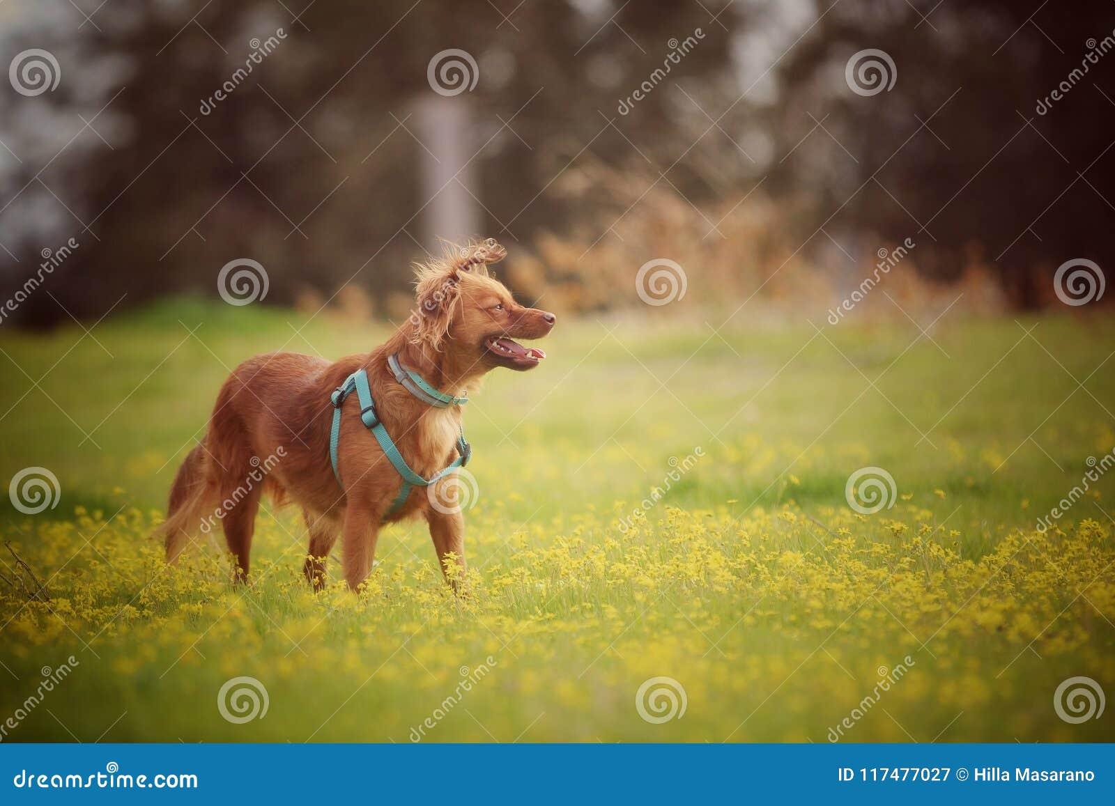 Milchig der Hund