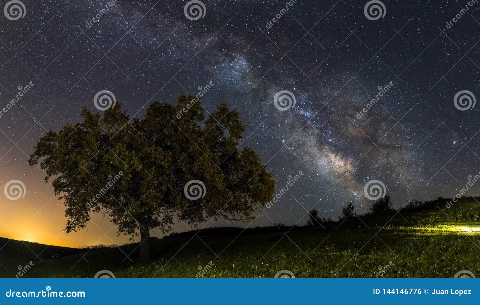 Milchstraße und der Baum
