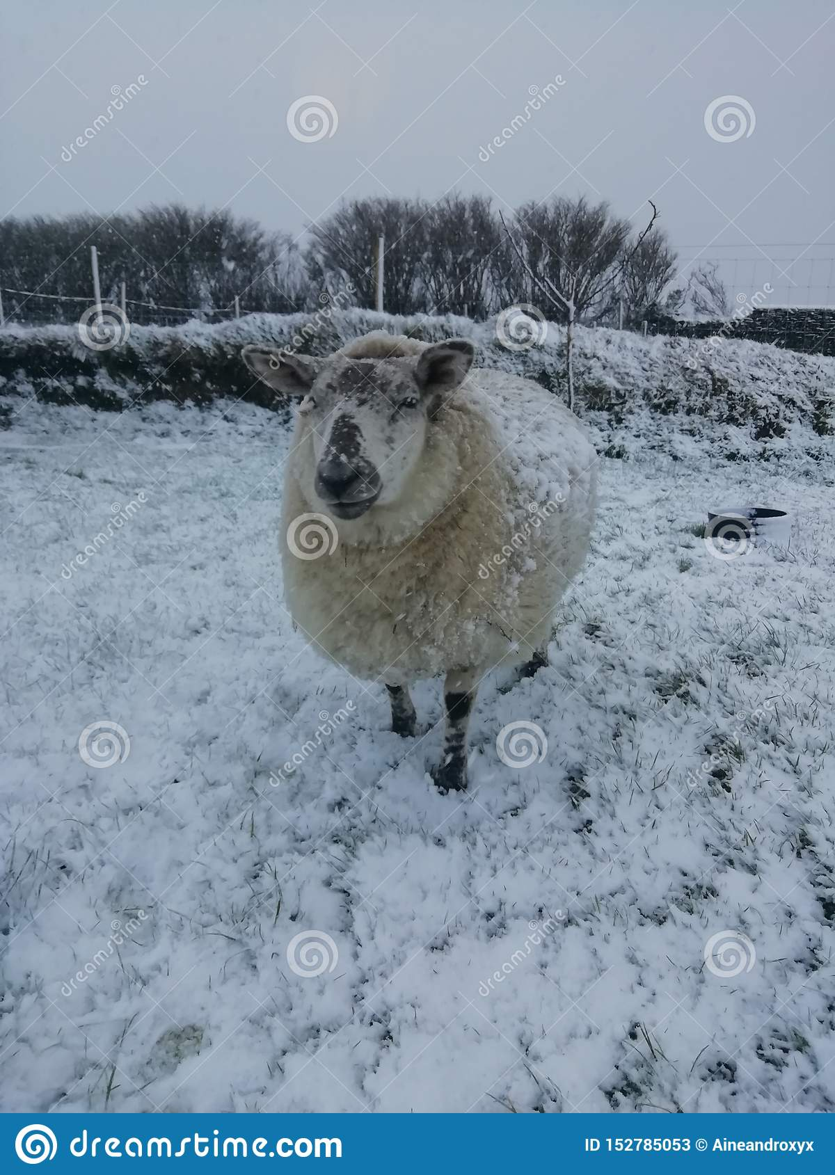 Miley in the snow again