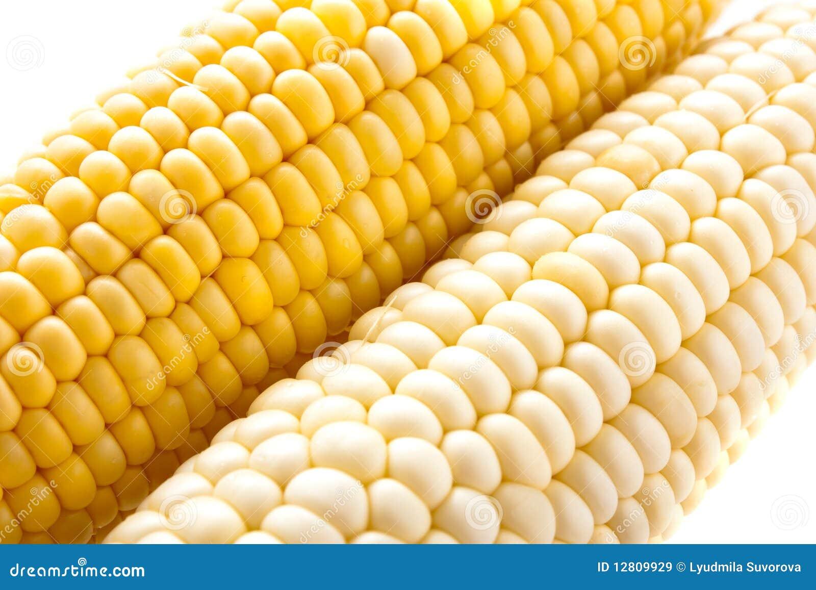 Milho amarelo e branco