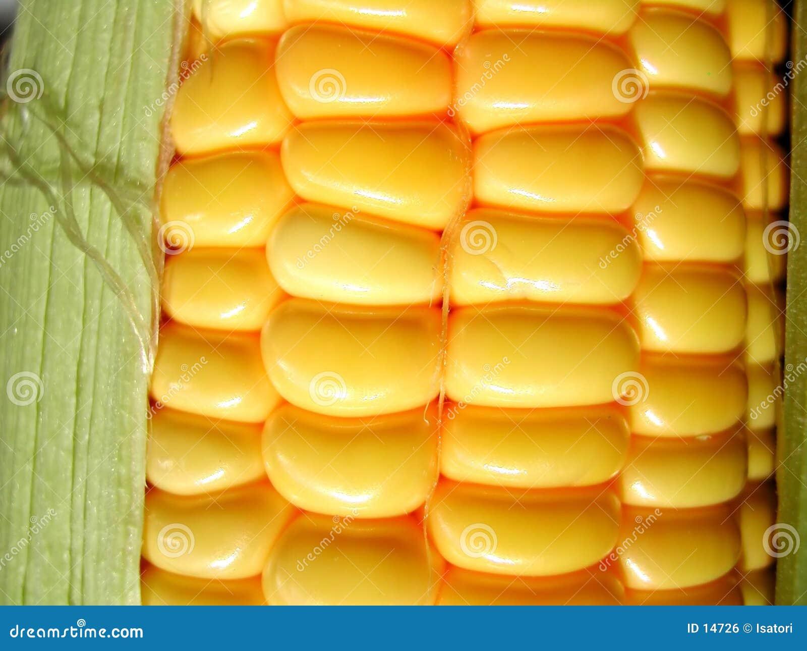 Milho fresco