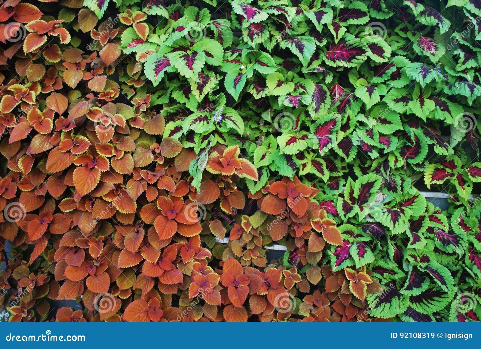 Verticale Tuin Zakken : Milieuvriendelijke verticale tuin wal stock afbeelding