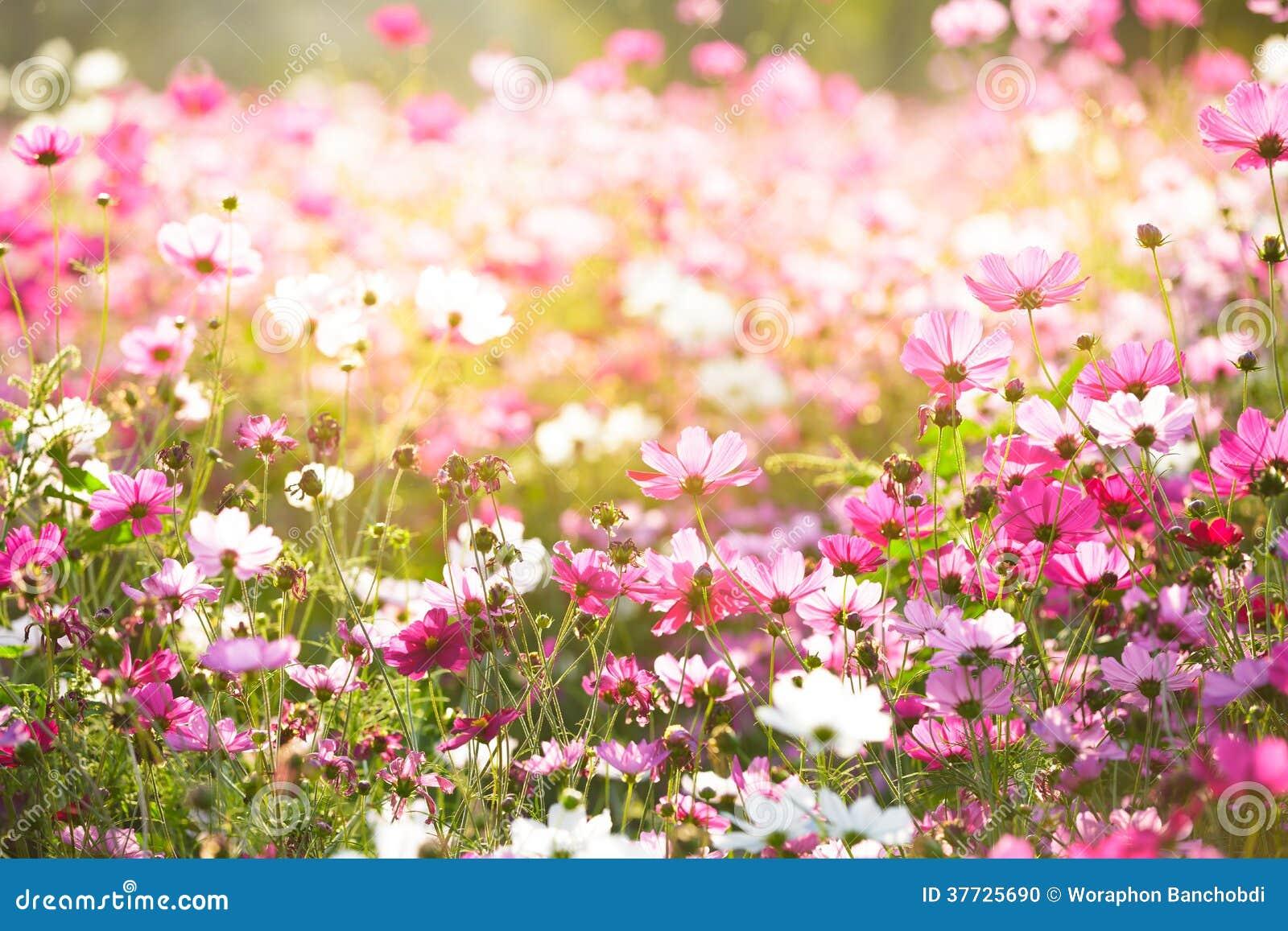 Milieux floraux