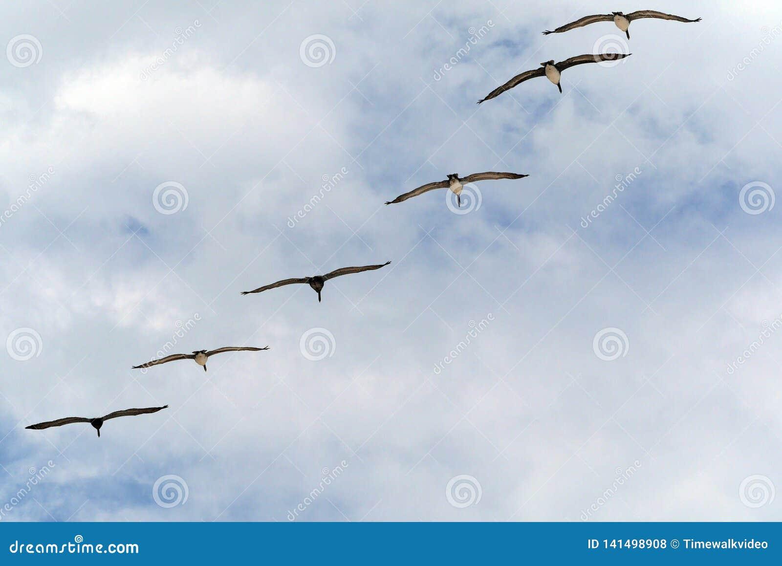 Militair-als Vorming die van Zes Vogels boven overgaan