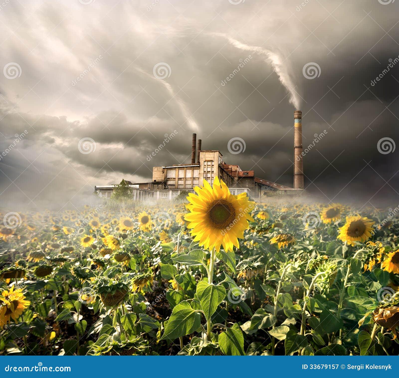 Miljö- förorening
