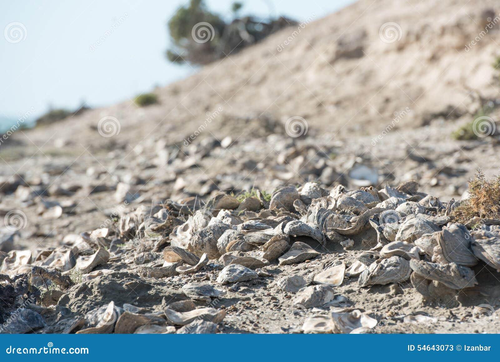 Miljard åriga skal på stranden