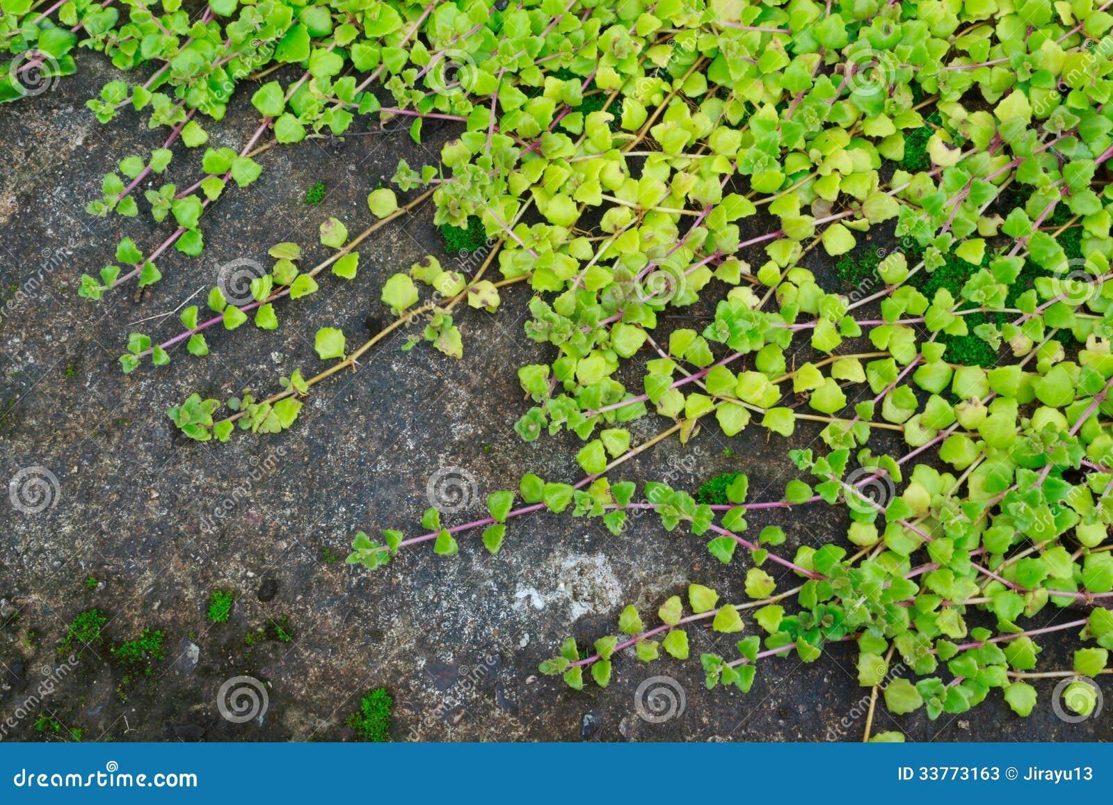 Miljoen hartenboom stock foto 39 s afbeelding 33773163 - Tuin decoratie buitenkant ...