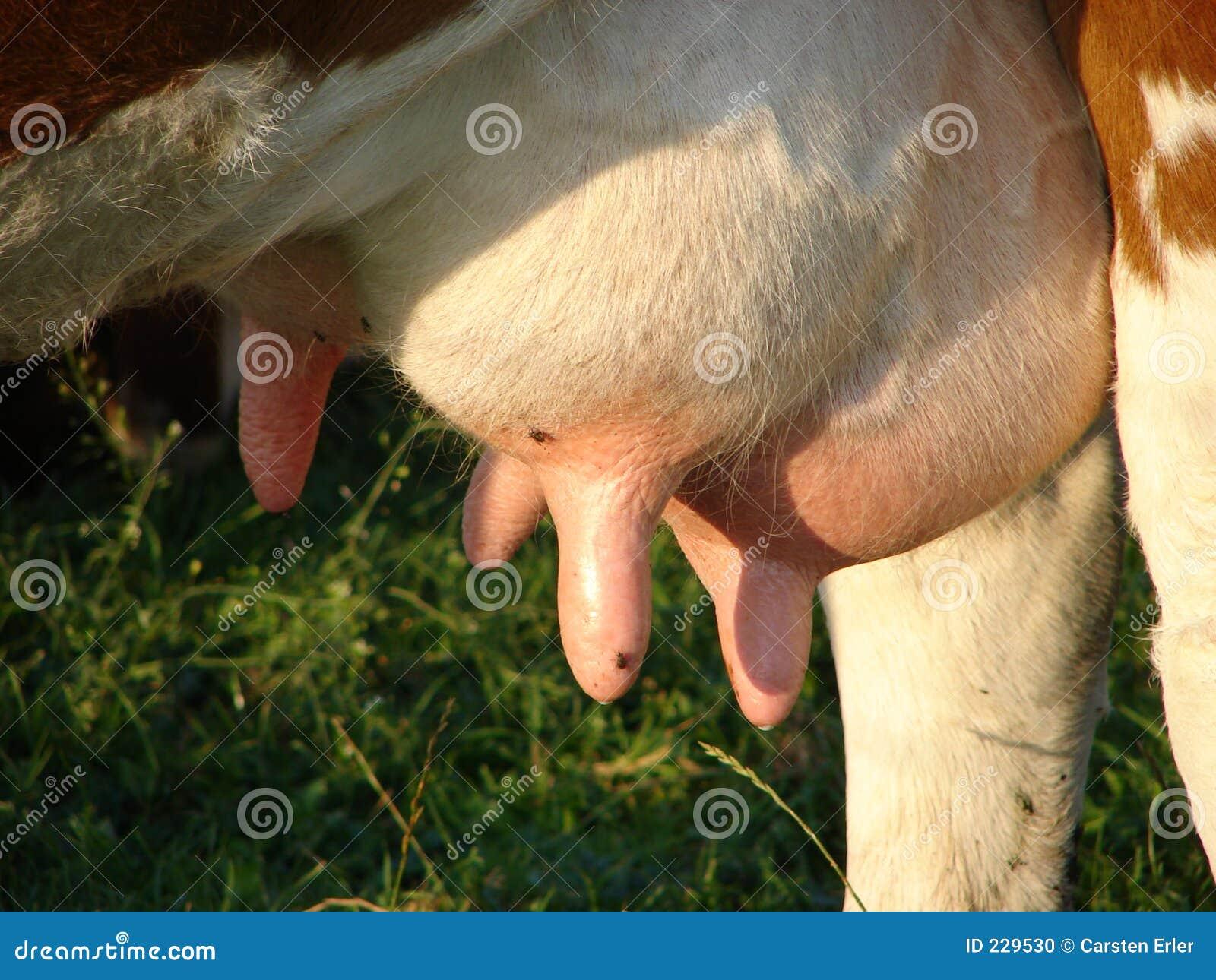 порно сиси с молоком