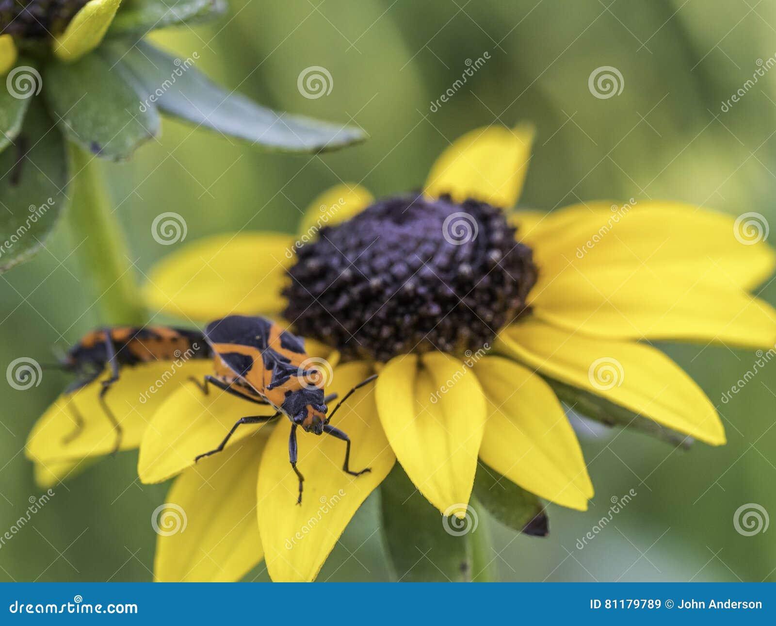 Milkweed bug on plant