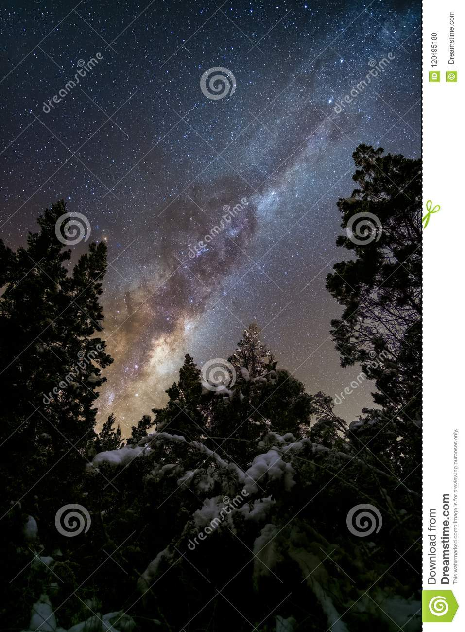 Milky way galaxy core between pine trees in dark winter forest with snow