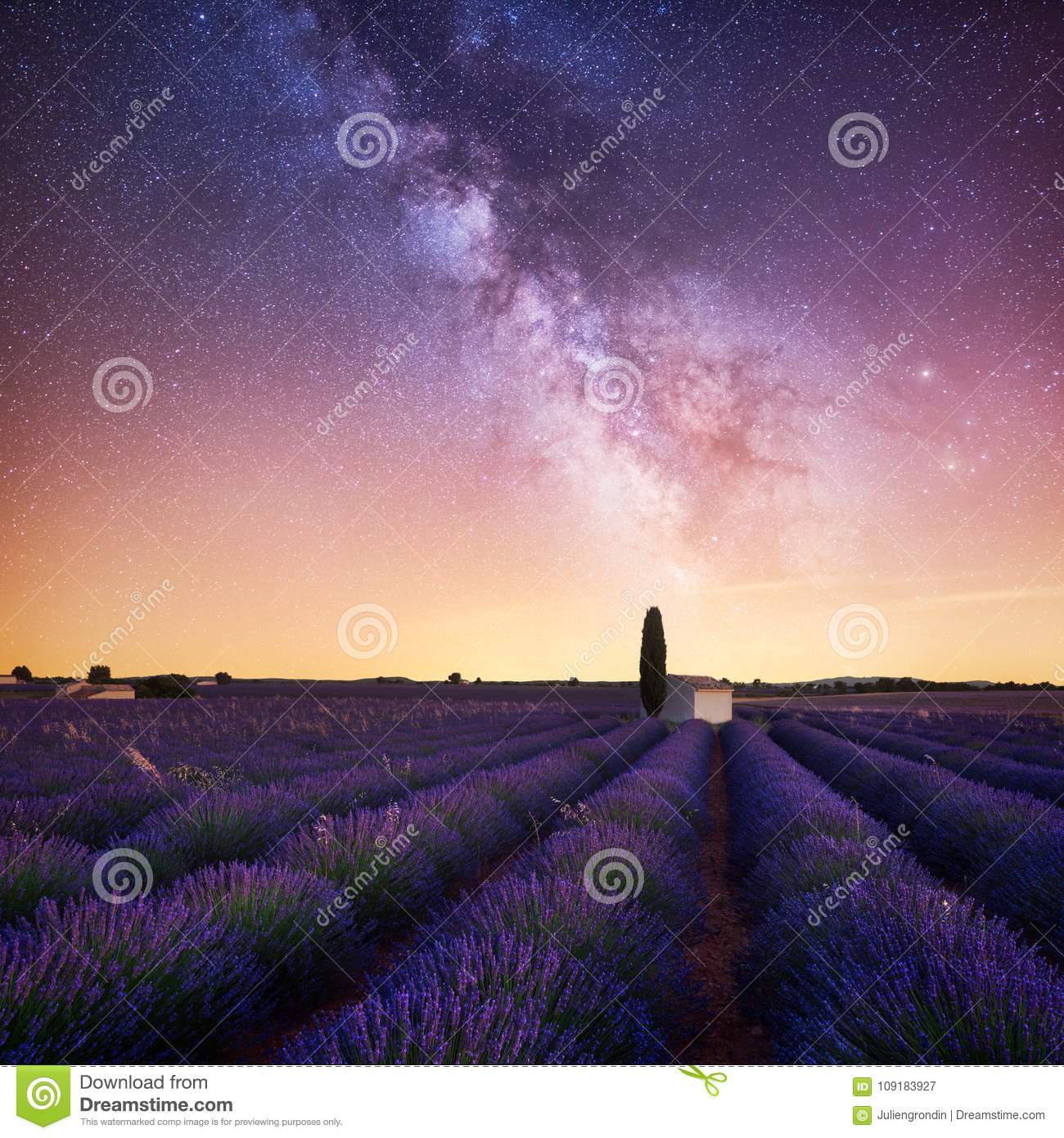 Milky Way over lavender field in Provence France