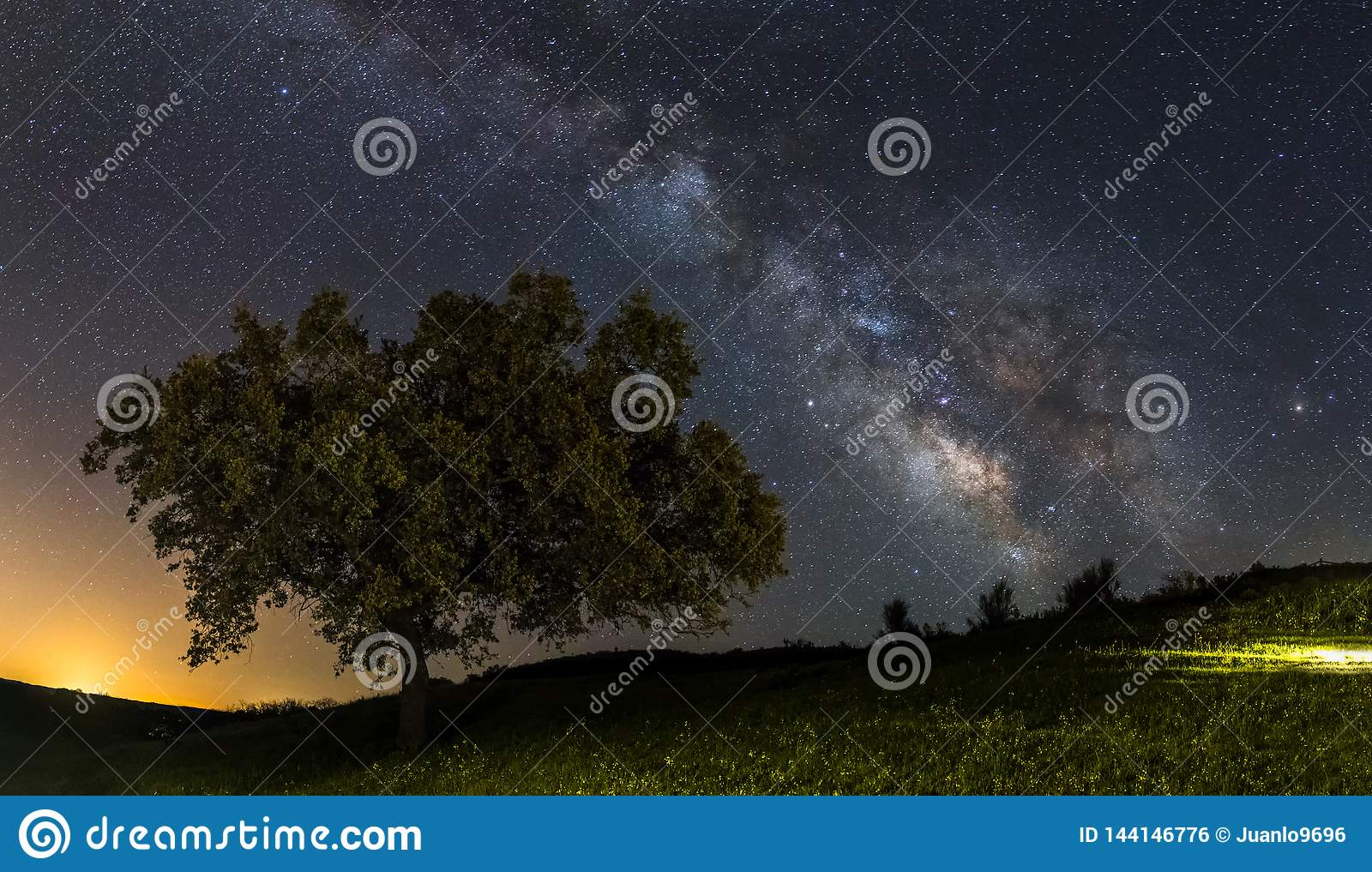 Milky way and the tree
