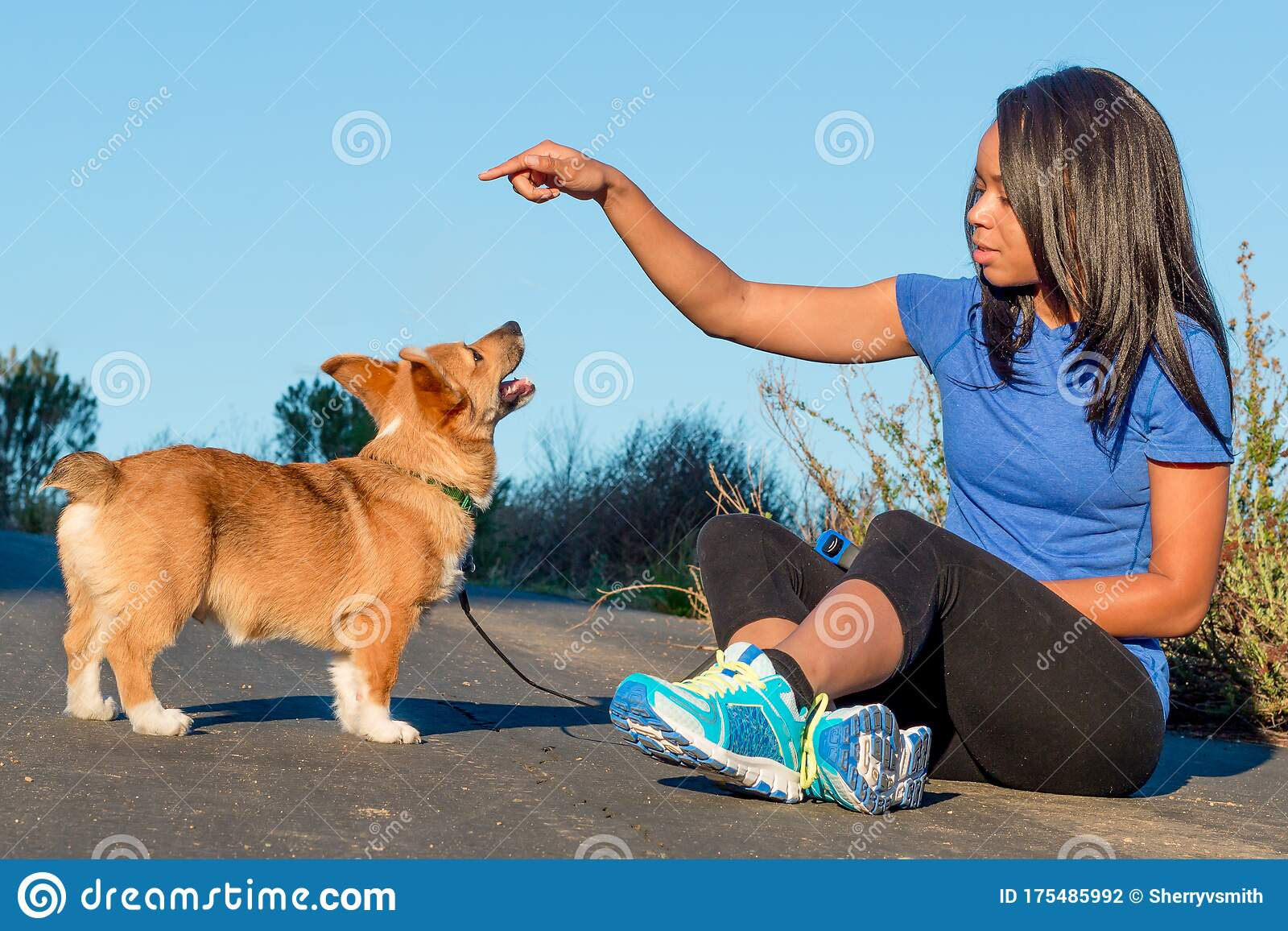 African American Millennial Woman Training Corgi Puppy Stock Photo Image Of Cute Lady 175485992