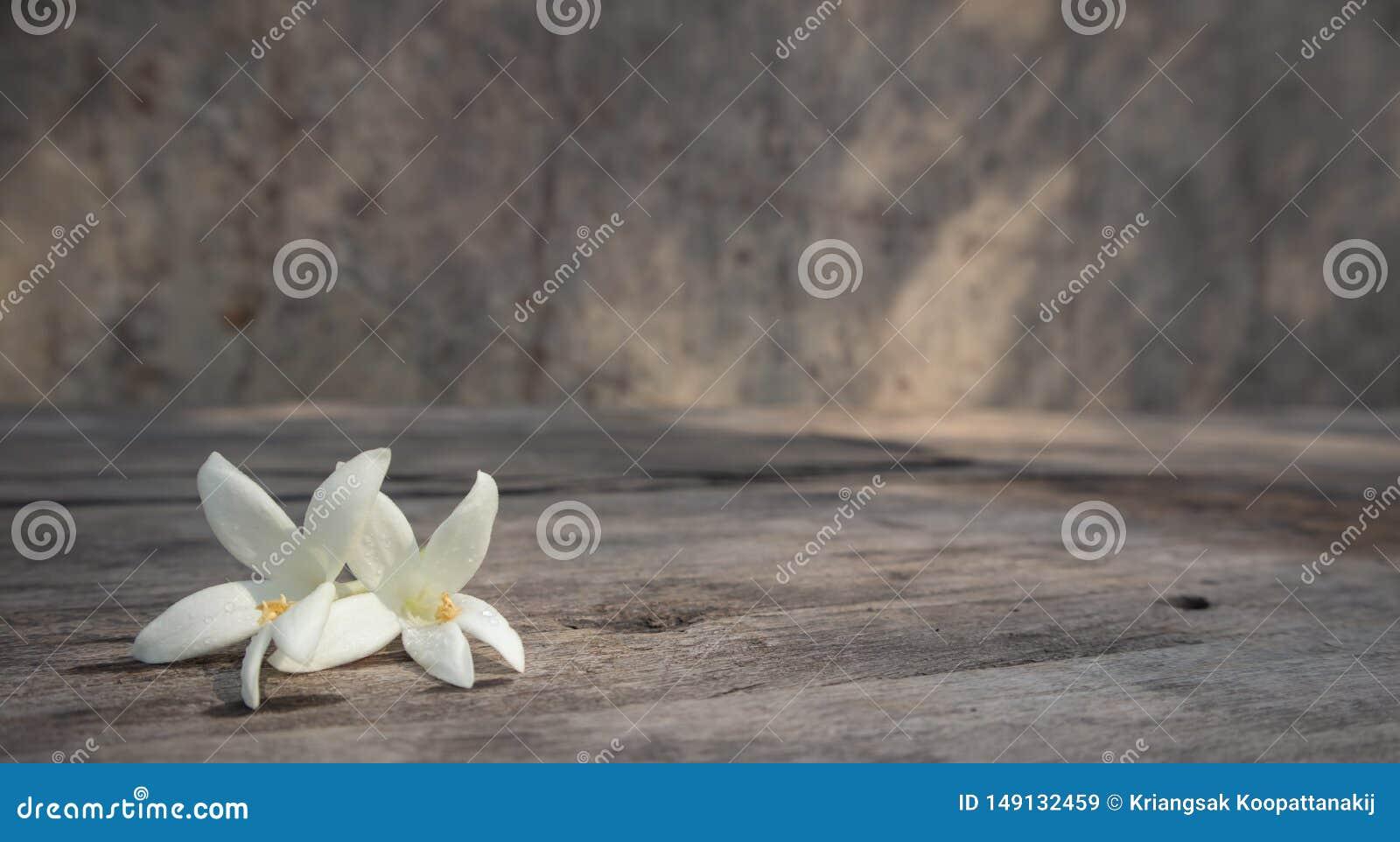 Millingtonia blanco en la tabla de madera