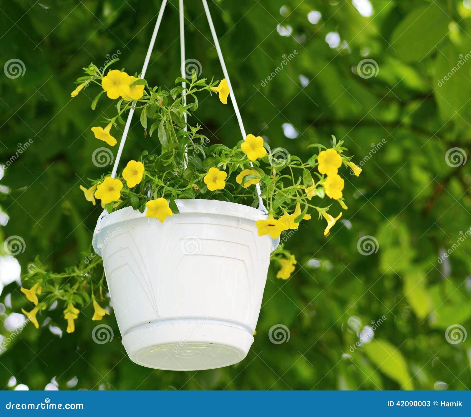 Million bells calibrachoa flower stock image image of white royalty free stock photo mightylinksfo