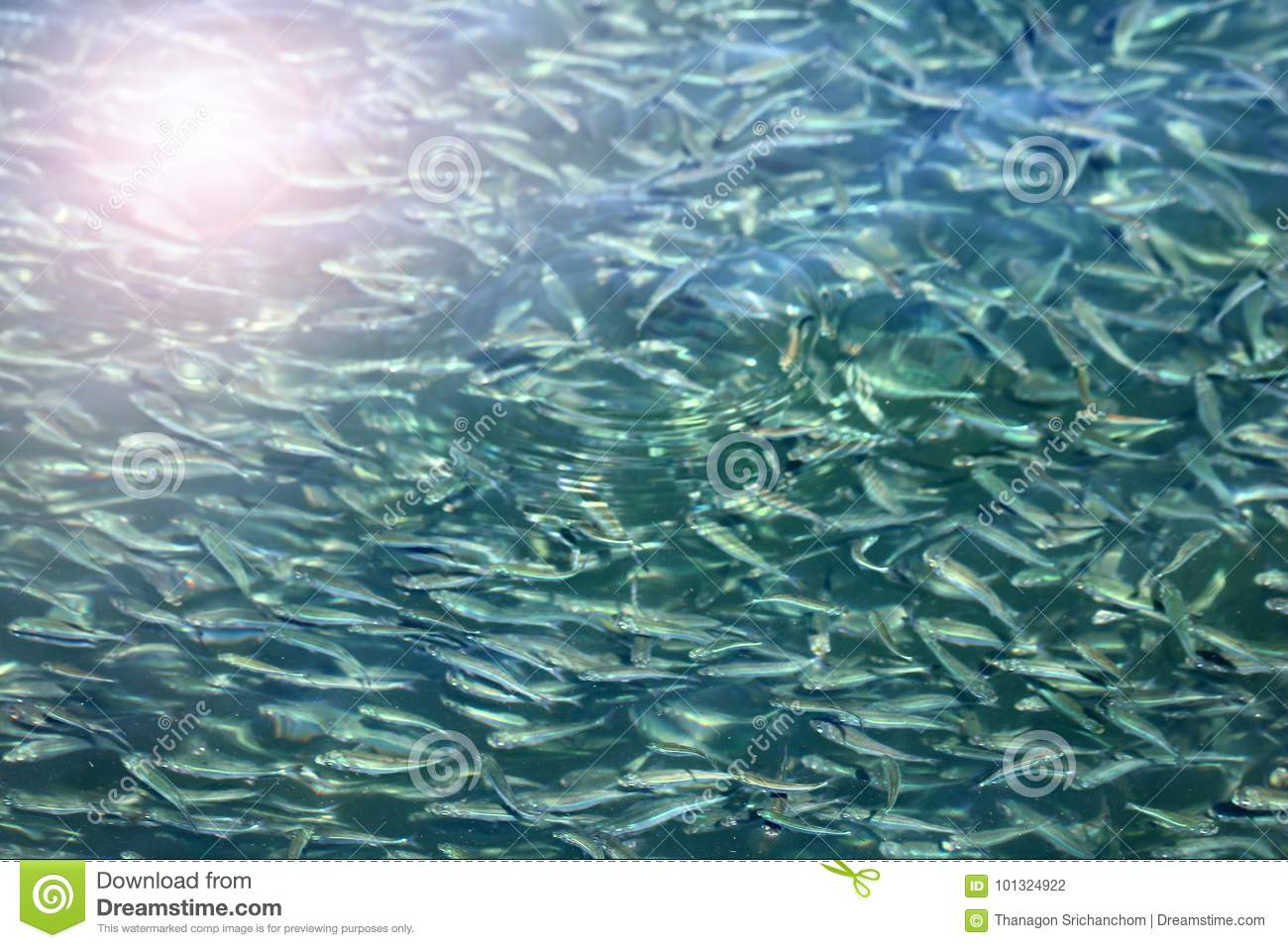 Millions of little fish under the sea water reflects sunlight stock download millions of little fish under the sea water reflects sunlight stock photo image publicscrutiny Image collections