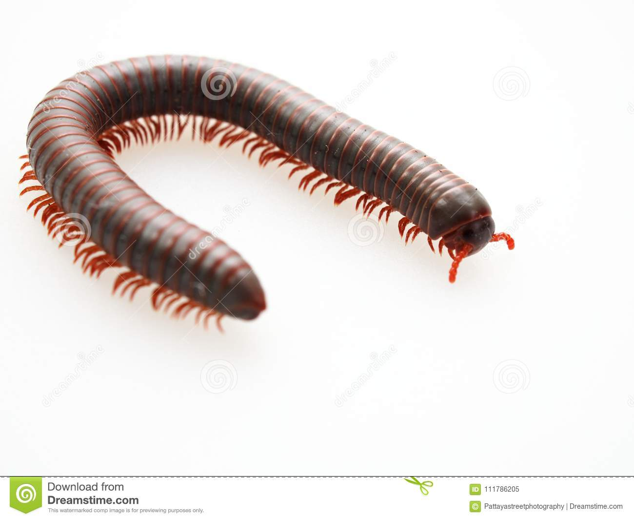Dream Center Centipede, what does the Centipede dream to see 79